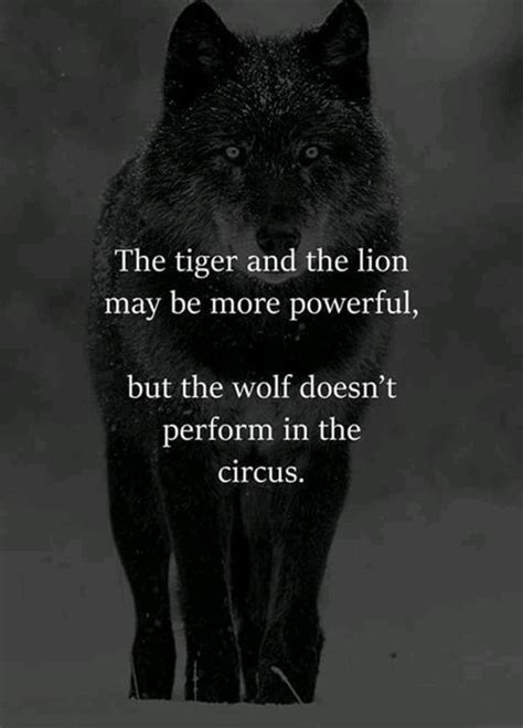 Lion and Wolf Quotes