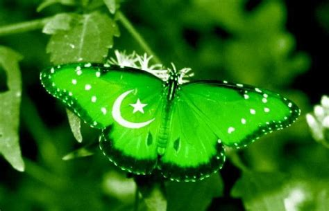 3d Wallpapers In Pakistan by Hd Wallpaper 3d Best Pakistan Flag Funonsite