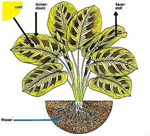 Pflege Von Zimmerpflanzen : aller ber pflege pflege von zimmerpflanzen zimmerpflanzen zimmer und gartenblumen ~ Markanthonyermac.com Haus und Dekorationen