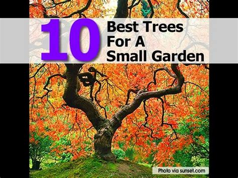 best trees to plant in garden 10 best trees for a small garden