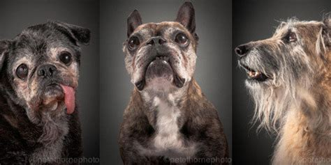 Photographer Pete Thorne Turns Older Dogs' Photos Into