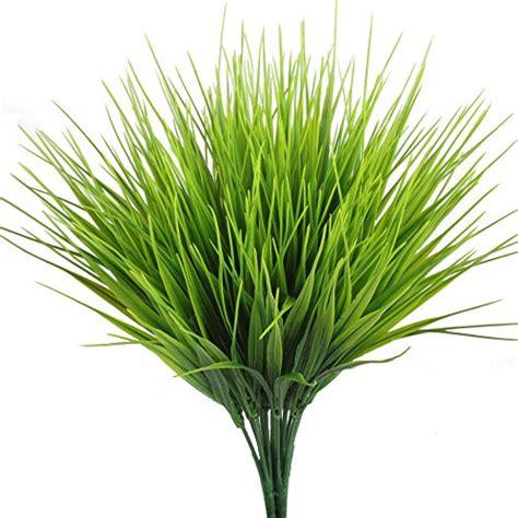 Tall Grass Plants: Amazon.com