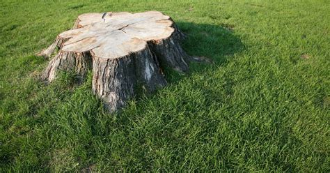 How To Use Bleach To Kill A Tree Stump  Ehow Uk