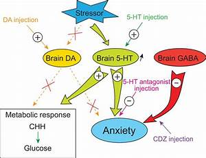Serotonin  But Not Dopamine  Controls The Stress Response And Anxiety
