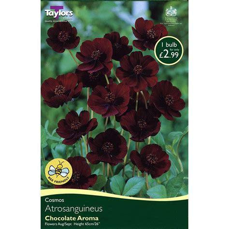 bulbs chocolate cosmos atrosanguineus1 bulb on sale