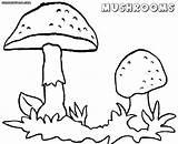 Mushroom Coloring Toadstool Mushrooms Magic Printable Template Colorings Getcolorings Templates Getdrawings sketch template