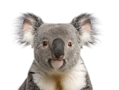 Facts About Iconic Marsupials