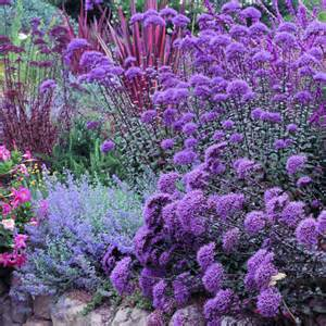 Drought Resistant Plants with Purple Flowers