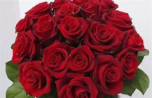 fleurte amour