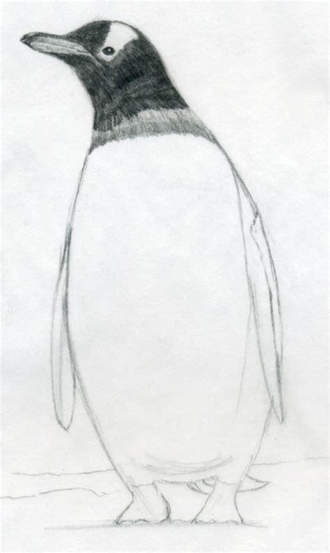 draw  penguin