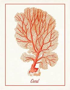 70 best images about Natural Illustrations on Pinterest ...