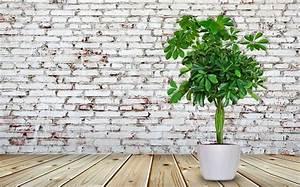 Pflegeleichte Pflanzen Für Die Wohnung : bild 8 pflegeleichte zimmerpflanzen schefflera ~ Michelbontemps.com Haus und Dekorationen