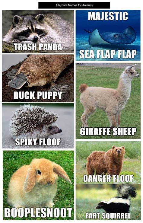 Animal Memes - just because why not these are pretty ridiculous and who doesn t need a laugh majestic