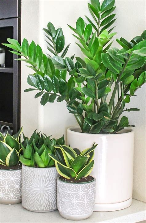 top   maintenance house plants  beginners