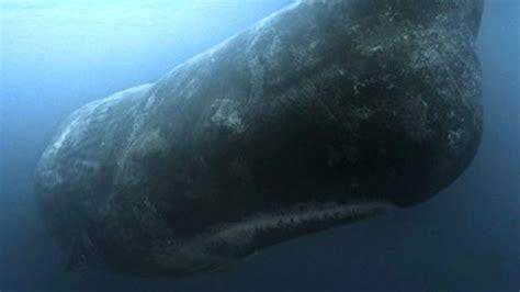 la verdadera historia de moby dick puede una ballena