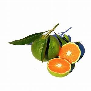Orange Et Vert Dunkerque : comment soulager un lumbago ~ Dailycaller-alerts.com Idées de Décoration