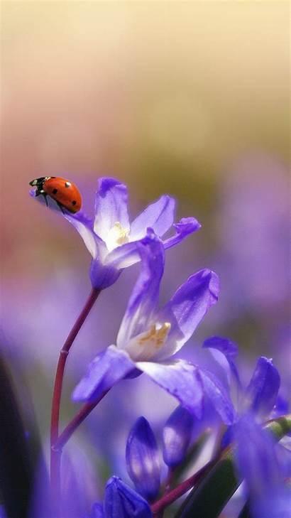 Purple Flower Wallpapers Iphone Desktop Flowers Android