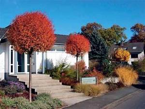 Kleine Bäume Für Den Vorgarten : kugelb ume f r den vorgarten dezember 2005 familienheim und garten ~ Sanjose-hotels-ca.com Haus und Dekorationen