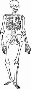 Comparing Vertebrate Skeletons