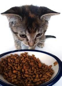 what is the best cat food what is the best cat food and how to choose petful