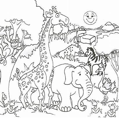 Safari Coloring African Pages Printable Animals Animal