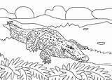 Alligator Coloring Pages Crocodile Cool2bkids Printable Animal Colored Books sketch template