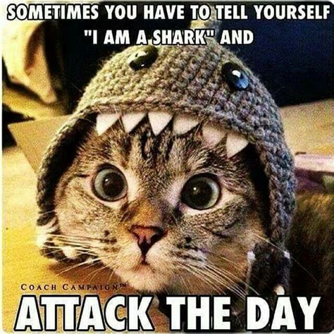 Shark Attack Meme - quote quot sometimes you have to tell yourself i am a shark and attack the day quot unknown