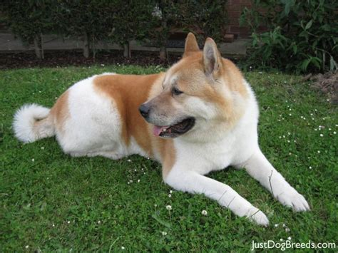 Low Shedding Large Dogs by Large Low Shed Breeds Breeds Picture