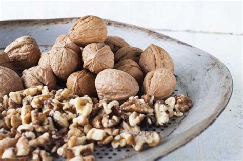 growing walnuts  profit