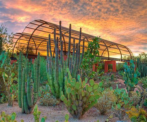 desert botanical garden landscaping ideas from the desert botanical garden