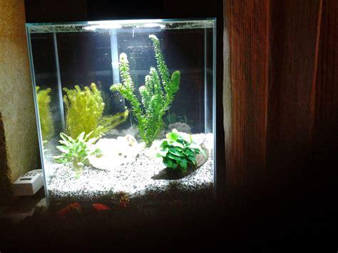 4 jours apres mise en eau 0 nitrate introduction possible de poissons