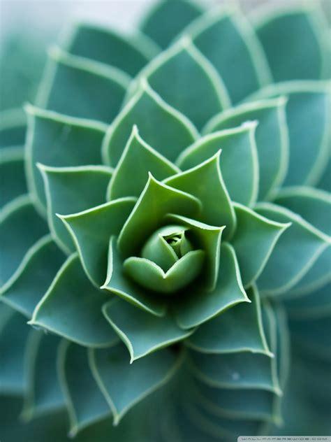 beautiful plant  hd desktop wallpaper   ultra hd tv