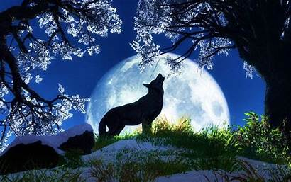Wolves Wallpapers Wolf Night Anime Animated Backgrounds