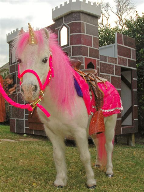 pony party unicorn zoo petting ponies rides birthday dallas pink rental parties shetland ride unicorns horse mini texas bday polish