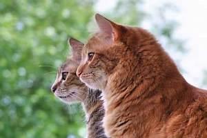 Kann Der Vermieter Katzen Verbieten : einzelhaltung von katzen m gliche folgen fakten und mythen ~ Buech-reservation.com Haus und Dekorationen