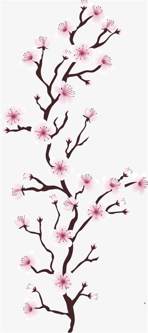 Japanese Cherry Blossom Illustration Vector Cherry