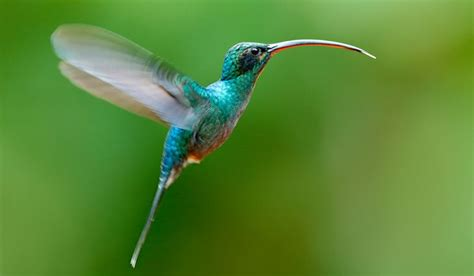 what is the only bird that can fly backwards the only bird that can fly backwards worldatlas