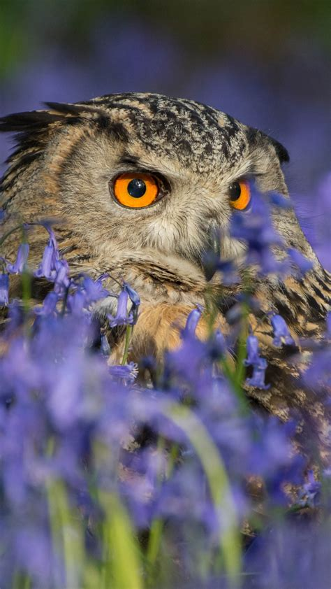 wallpaper owl hd  animals