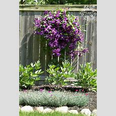 1000+ Ideas About Hardy Plants On Pinterest  Flowers For