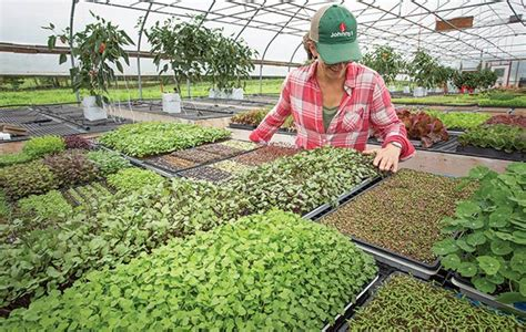 Year-Round Microgreens Production for Profit