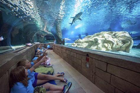 mall of america aquarium beat the winter blues sea minnesota aquarium