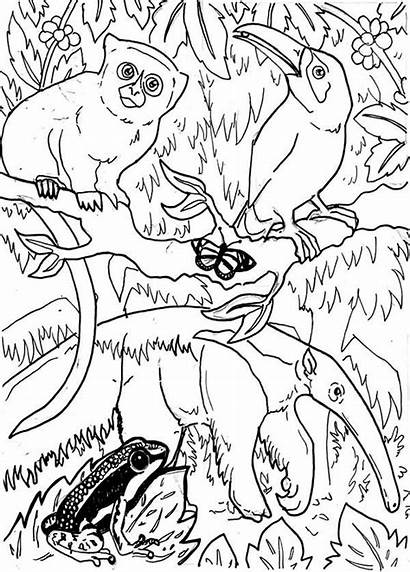 Rainforest Coloring Animals Amazing Pages Forest Animal