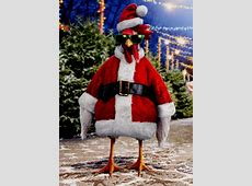 Santa Chicken Box of 10 Funny Christmas Cards by Avanti Press