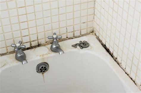 wallpaper borders bathroom ideas i found mold in my shower bathtub is it black mold