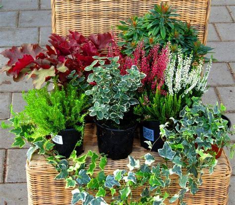 Pflegeleichte Balkonpflanzen Ganzjährig by Balkonpflanzen Set F 252 R Balkonkasten 60 Cm Lang Pflanzen