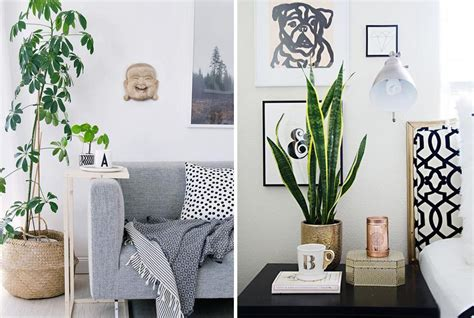 quelle plante pour une chambre quelle plante mettre dans chaque pièce de la maison