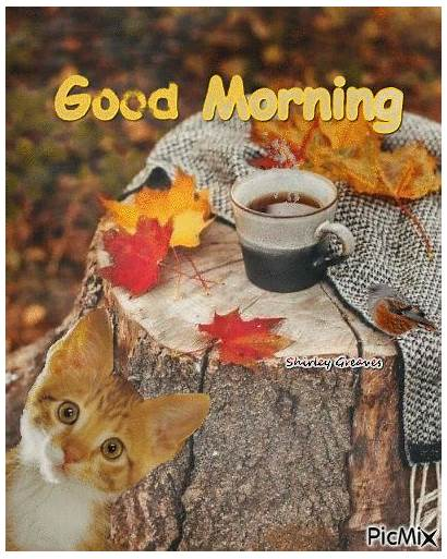 Morning Cat Animated Fall Quote