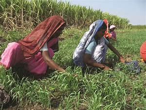 Adopt Innovative Agricultural Practices | Women build ...