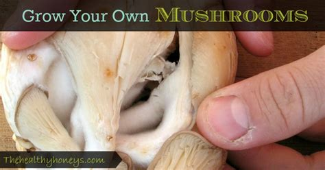 grow your own mushrooms how to grow your own mushrooms the healthy honeys