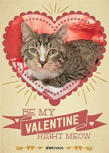 12 Kitty-cat Valentine's Day cards that will make you aww ...